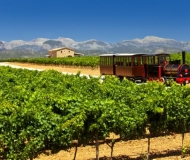 mallorca-wine-tours-day-tour-05